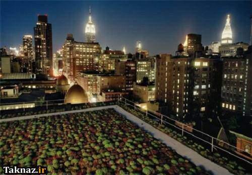 عکس, تصاویر باغ و باغچه های روی پشت بام خانه های کشورهای مختلف