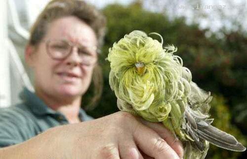 image عکس هایی زیبا از یک پرنده بی نظیر