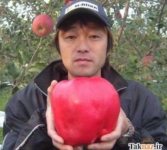 image عکس بزرگترین سیب جهان در کتاب رکوردهای گنیس
