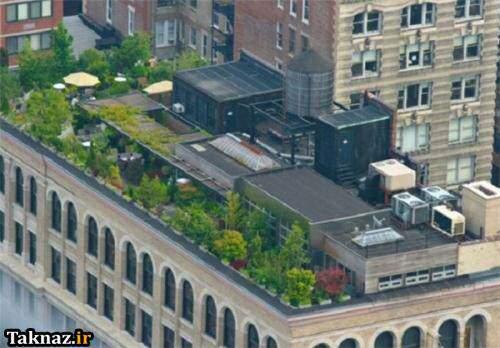 image تصاویر باغ و باغچه های روی پشت بام خانه های کشورهای مختلف
