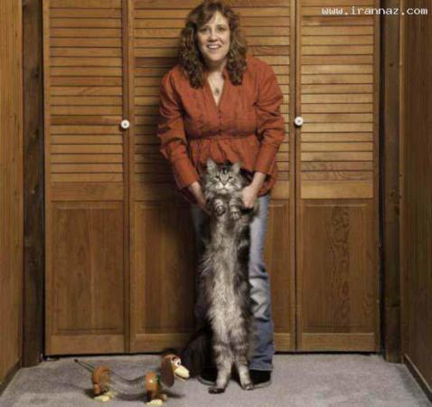 image تصویری درازترین گربه خانگی دنیا کتاب رکوردهای گینس