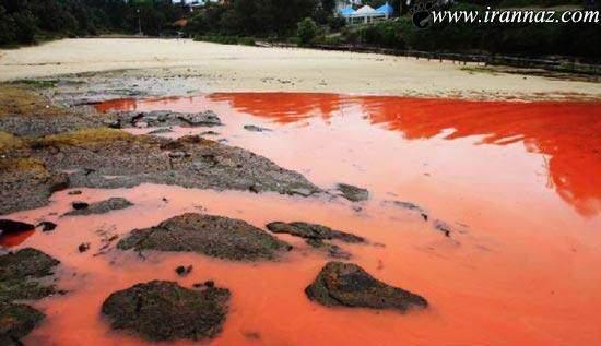 image عکسهای دیدنی و توضیحات درباره دریای خون استرالیا