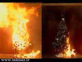 image آیا درخت های کریسمس باعث مرگ آدم ها می شوند
