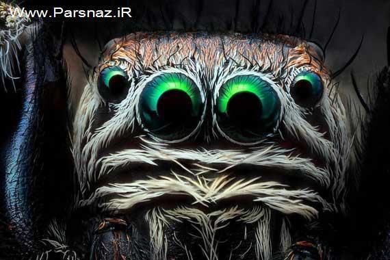 image آیا حشرات هم چشم دارند
