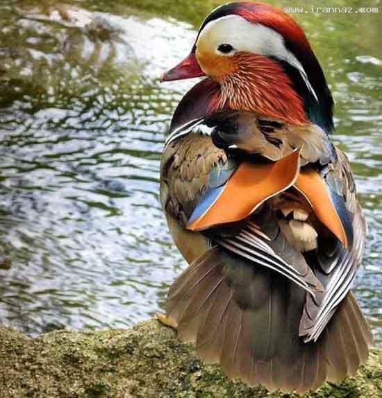 image عکس های زیبا از رنگ های آفرینش جهان