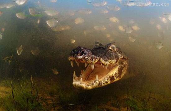 image دیدنی ترین عکس های گرفته شده از زندگی حیوانات