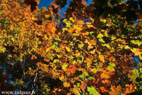 image اوج زیبایی خلقت در پارک پائیزی آلگوکویین
