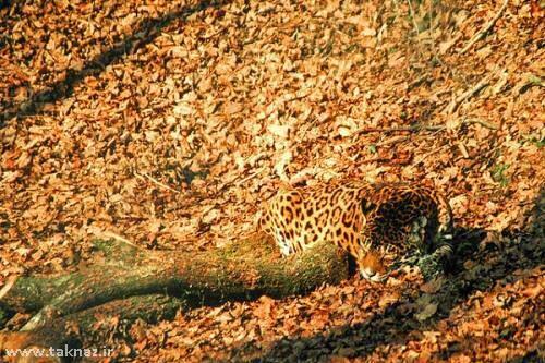 image عکس های حیواناتی که خود را همرنگ محیط اطراف میکنند