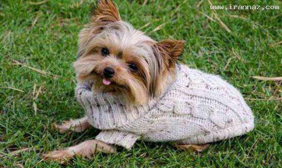 image عکس کوچک ترین سگ دنیا کتاب رکوردهای گینس
