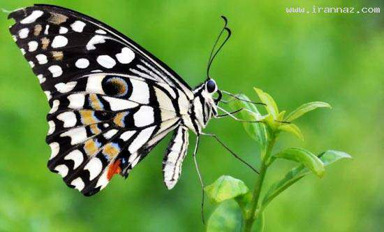 image, عکس های زیبا از رنگ های آفرینش جهان