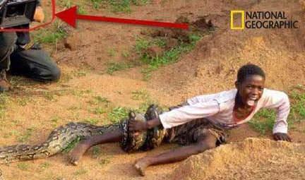 image خورده شدن کودک زنده زنده توسط مار راست است