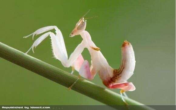 image عکس هایی باور نکردنی از زیباترین حشرات جهان