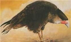 image حیواناتی که در جهان هستی نابود شده اند