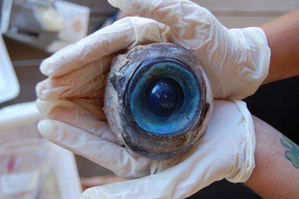 image کشف چشم بزرگ یک موجود ناشناخته دریایی در سواحل فلوریدا