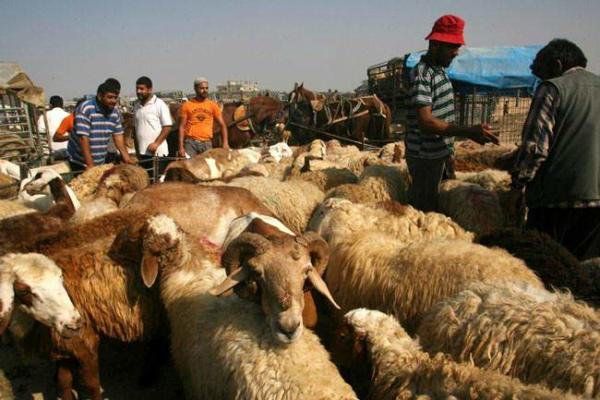 image, بازار فروش احشام در آستانه عید قربان در غزه