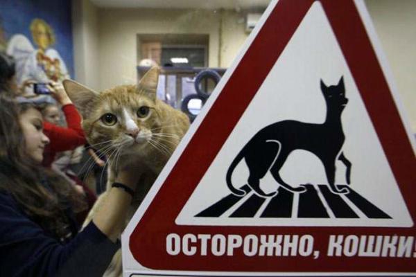 image, کافی شاپ گربه ها در سن پترزبورگ روسیه،