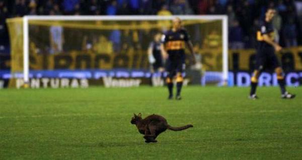 image ورود یک گربه به زمین بازی در استادیوم فوتبال در آرژانتین