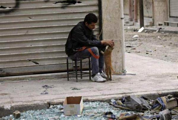 image سرباز ارتش آزاد سوریه مشغول بازی با یک گربه در حلب