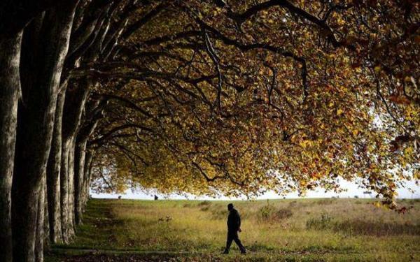 عکس, طبیعت پاییزی در لوزان سوییس