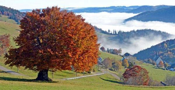 image, نمایی زیبا از روستایی در آلمان