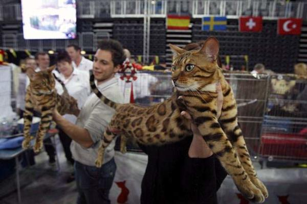 image فستیوال بین المللی گربه ها در زاگرب کرواسی