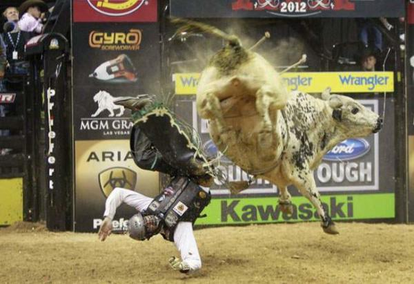 image مسابقه استقامت بر روی گاو وحشی در آمریکا