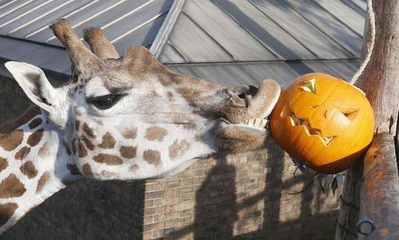 image جشن هالووین در باغ وحش لندن