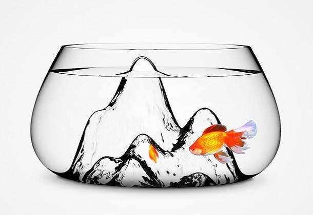 image مدل های جدید آکواریوم ماهی