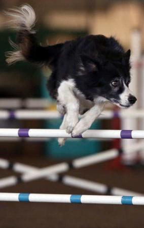 image مسابقات سگ چابک در سانتارزا کالیفرنیا آمریکا