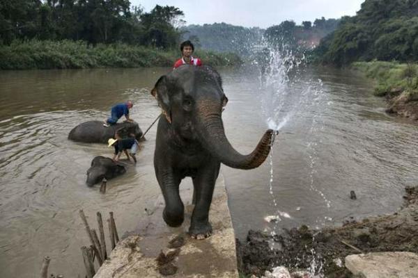 image حمام فیل ها در تایلند