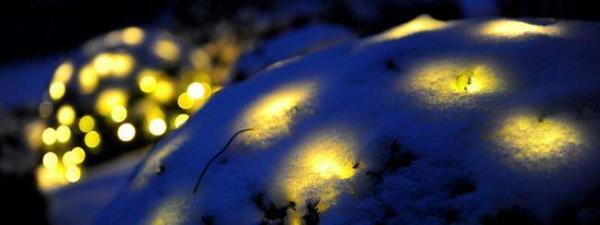 image لامپ های تزیینی درختان زیر برف مانده در آلمان