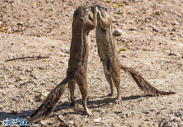 image تصاویر سنجاب های بازیگوش در پارک ملی