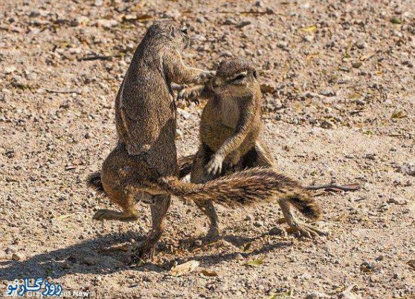 image, تصاویر سنجاب های بازیگوش در پارک ملی