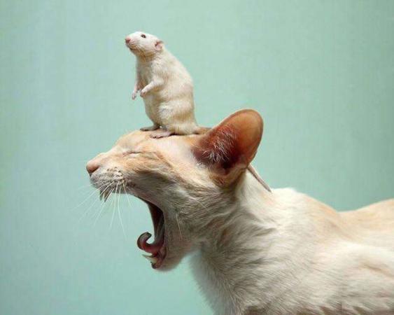 image عکس های بامزه از شیرین کاری های حیوانات