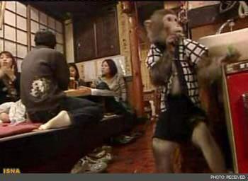 image, بعد از این میمون ها به جای آدم ها در رستوارن ها کار می کنند