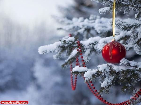 image عکس های زیبا و جدید از تزیین درخت های کریسمس