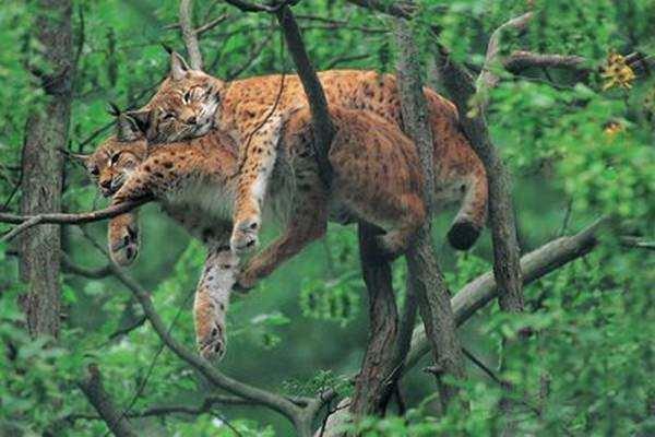 image تصاویری زیبا از علاقه حیوانات به یکدیگر