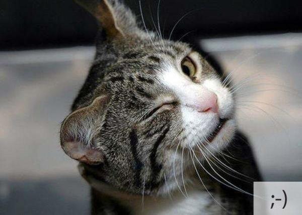 image عکس های شکلک های خنده دار صورت گربه های واقعی