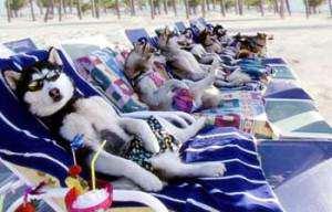 image مطالب طنز و جالب در مورد حیوانات آبان ۱۳۹۱