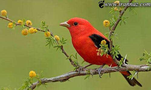 image تصاویر دیدنی از مناظر زیبای طبیعت رنگارنگ در جهان