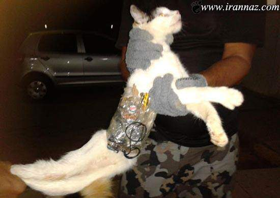 image عکس های بامزه از گربه های خلافکار در زندان