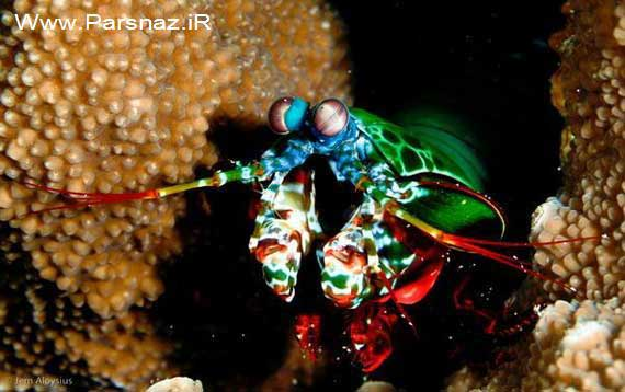 image عکس های دیدنی موجود ناشناخته رنگارنگ زیر آب