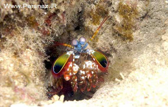 image, عکس های دیدنی موجود ناشناخته رنگارنگ زیر آب