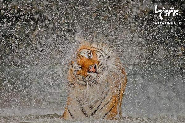 image, ۱۴ عکس بی نظیر از طبیعت با رتبه بندی نشنال جئوگرافی