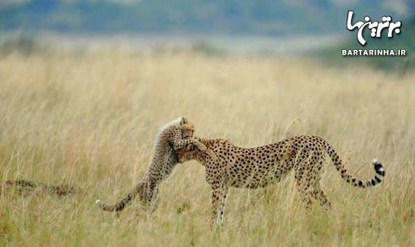 image ۱۴ عکس بی نظیر از طبیعت با رتبه بندی نشنال جئوگرافی