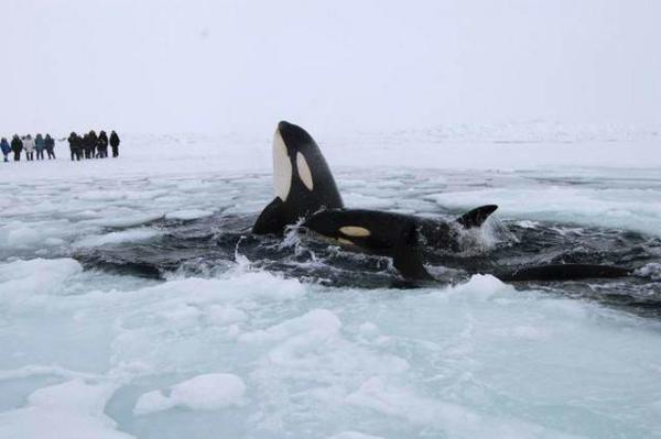 image, دو وال در یک دریاچه یخ زده در کبک کانادا