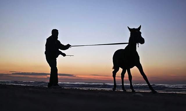 image, جوان فلسطینی در حال بازی با کره اسب ساحل غزه