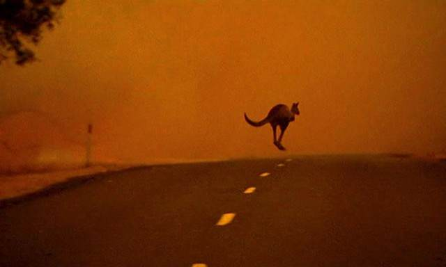 image فرار یک کانگورو از آتش سوزی های جنگل های ویکتوریا