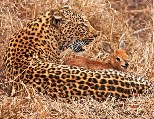 image عکس هایی زیبا از حیوانات بامزه