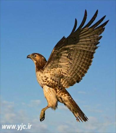 image گزارش تصویری از پرنده های خشن و خطرناک دنیا